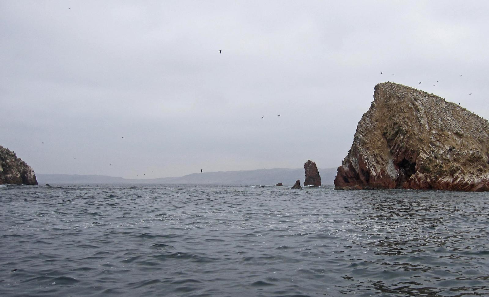 Islas Ballestas 81