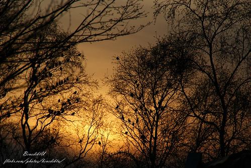 light tree colors leaves yellow dark landscape sonnenuntergang leer east ostfriesland vögel landschaft sonne farben raben schwarm frisia krähen