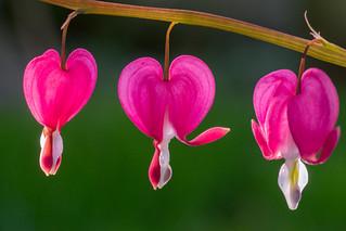 Three Flowers | by Brian Legate