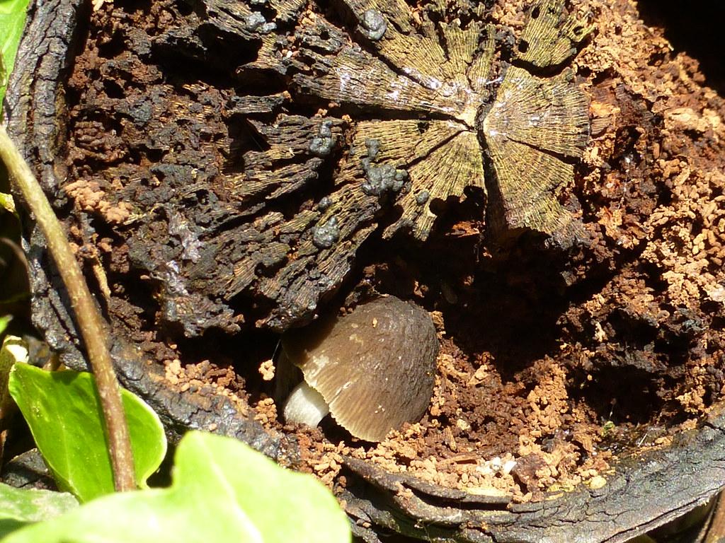 Rotting Log Fungus