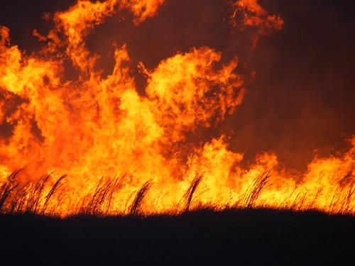 sydney australia bushfires ingleburn