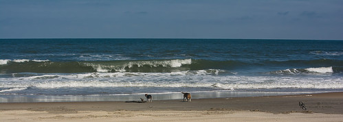4x4beach animals atlantic beach corolla dog horizontal mammals nc nature northamerica northcarolina obx ocean outerbanks outerbanx summer typenormal typeportrait typeshutterbuttonfocus usa waves