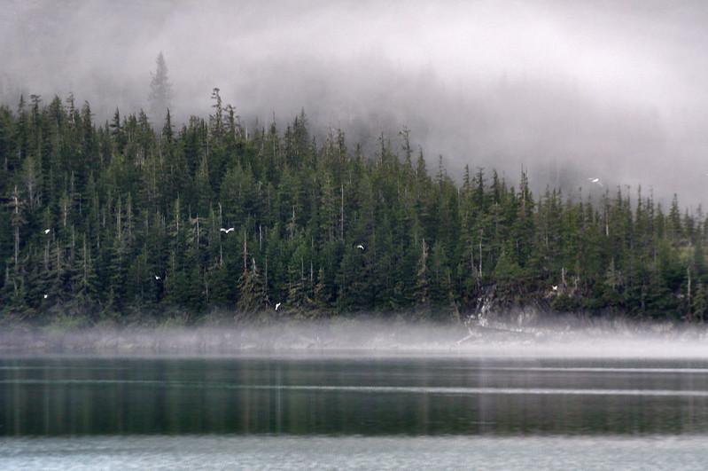 Mist in Alaska