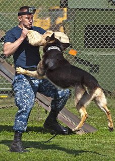 A military police working dog attacks. | by Official U.S. Navy Imagery