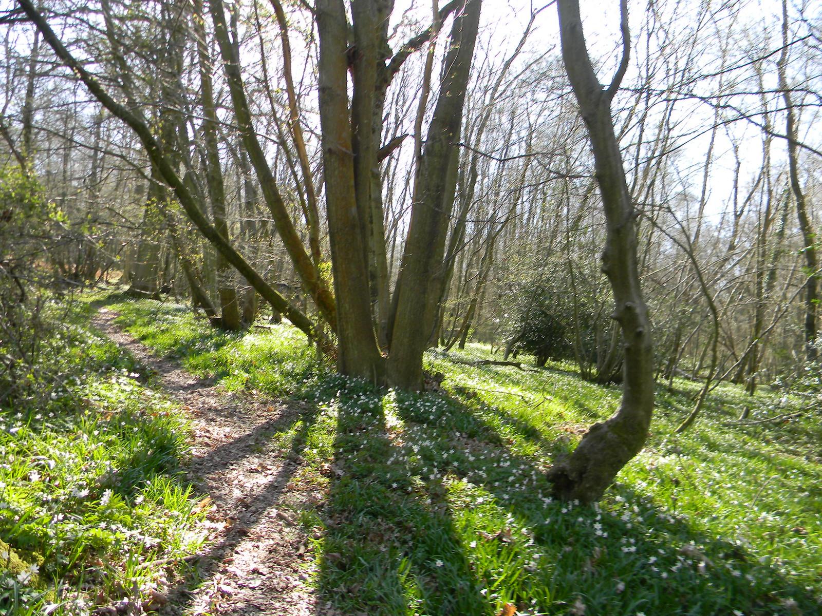 Tree shadow Robertsbridge to Battle