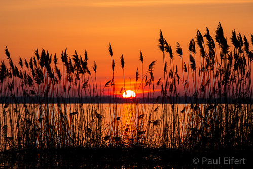 morning sky orange sun lake canada nature water grass sunrise reeds spring quebec montreal springtime ileperrot lacstlouis