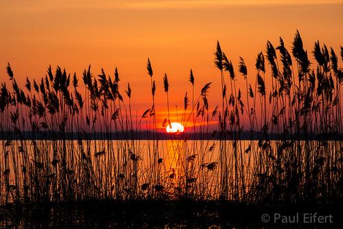morning sky orange sun lake canada nature water grass sunrise reeds spring quebec montreal springtime ileperrot lacstlouis