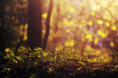 Spring sunlight - 2/365 (Explored, yay!) | by moonstream