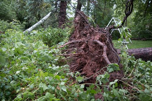My poor dead tree