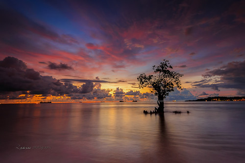 indonesia padangindonesia lonely tree sunset slowshutter sunrise magnificent nikond700 no people single audion bukittinggiindonesia pacujawi