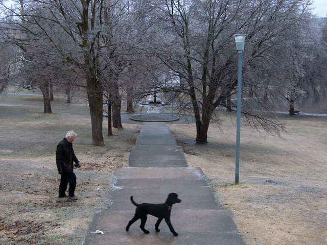 A walk in the icy park