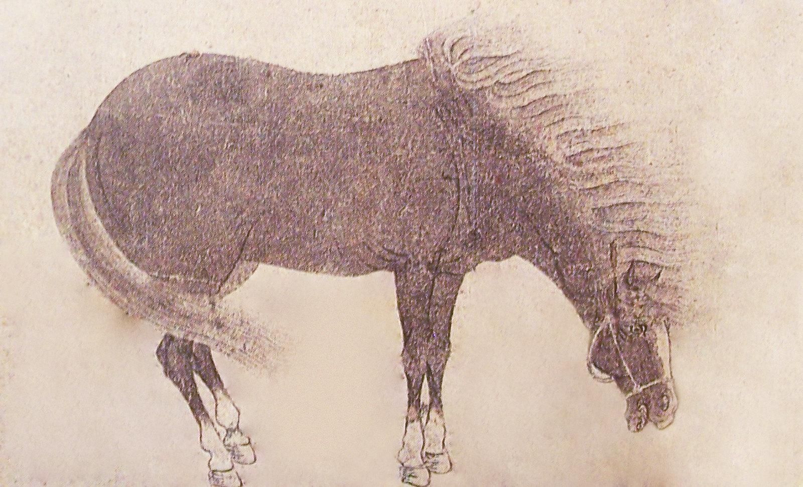 009Equus