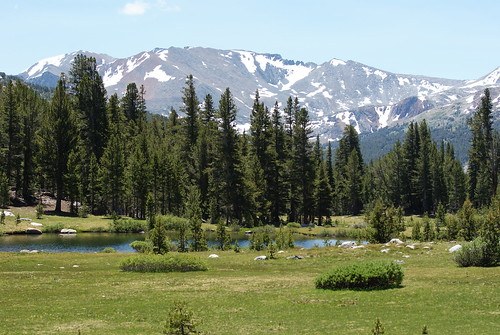 meadow forest mountains summer