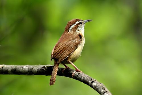 usa bird oklahoma nature canon geotagged wildlife gimp 7d gps geotag mwc midwestcity 100400 canonef100400mmf4556lisusm geodata gpicsync tomfs canoneos7d soldiercreeknaturetrail garminetrex20