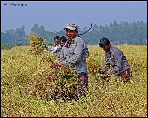 teeth portrait kalaborpur rice ricefields ricecrops hardwork happy migrantworker migrantworkers khanbari bangladesh bengali sylhet 2014