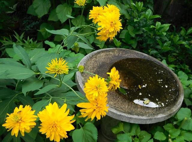 summer birdbath