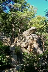 KY100_9465 Liz n Laura Climbed This Earlier