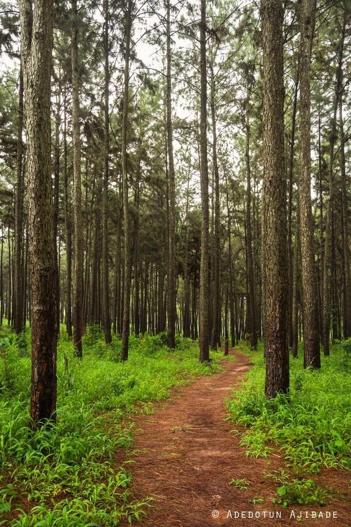 Enugu Nigeria  - into the woods