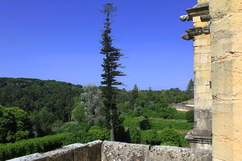 portugal tomar moyentage landscapes paysages nature arbres trees