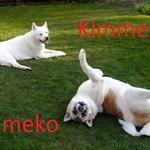 DSC03287 Kimmei & Kameko
