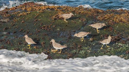 chile aves animal arturonahum ave airelibre birdwatcher bird birds wildflife wild nature naturaleza naturephotography pajaro pajaros