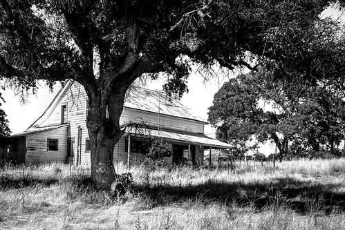 solemn d850 landscape bushes brush serious quiet tireswing california abandoned tree ropeswing scary creepy forgotten monochrome farm blackwhite jamestown unitedstates us