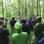 Black ash silviculture study sites on the Chippewa NF