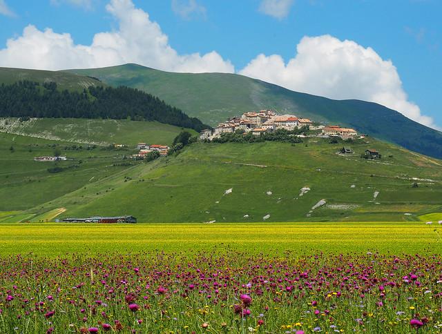 Castelluccio e il campo di cardi - Castelluccio and the thistles field