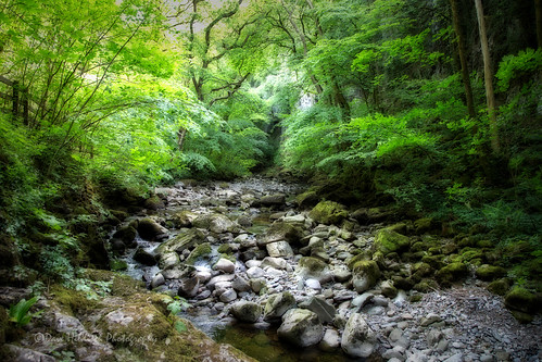 yorkshire yorkshiredales ingleton forests rivers labdscapes riverdoe