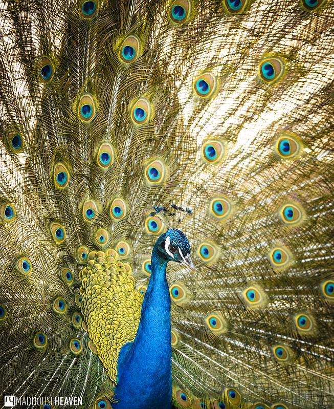 Barcelona Zoo - 0195