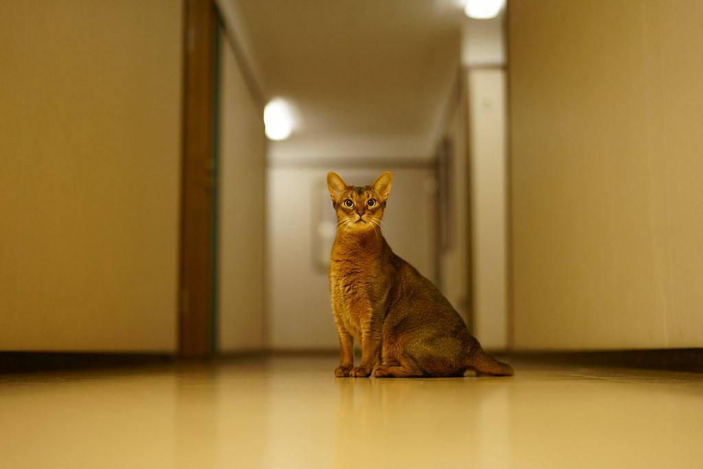 Lizzie in the hallway