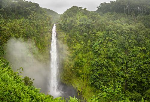 hawaii hawaiian hawaiianislands pacific pacificocean water waterfall cascade falls akaka akakafalls hilo jungle rain rainforest wet river stream