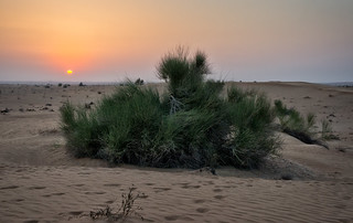 Sunset in the Dubai desert | by Tigra K