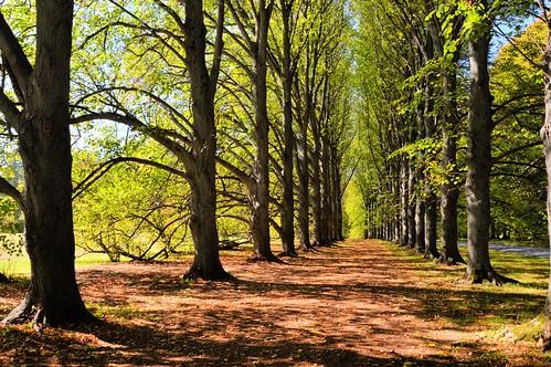 oldwestburygardens longisland nikon nikond3200 autumn sweepingallée