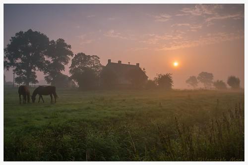 sunrise farm belgium warm morning sun horses nature landscape tree trees nikon d800