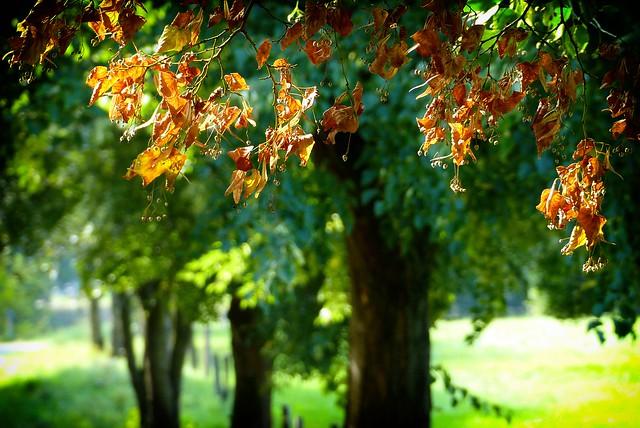 Fall comes...