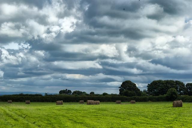 Cheshire Fields