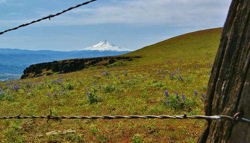 a350 056 (2) Mt. Hood Through The Fence