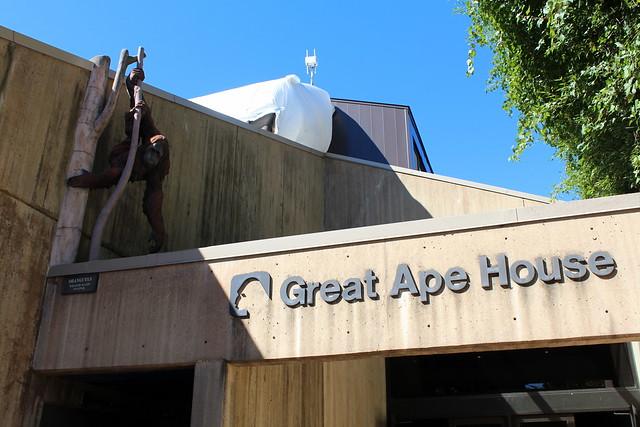 National Zoo - Great Ape House