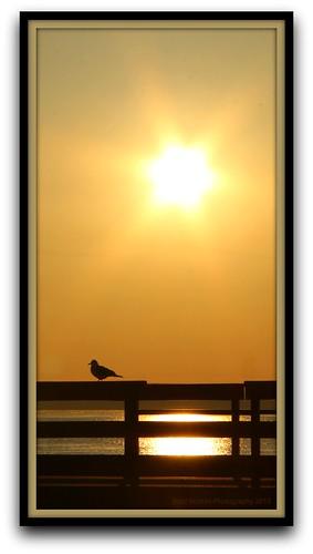 morning sky sun sol sunrise