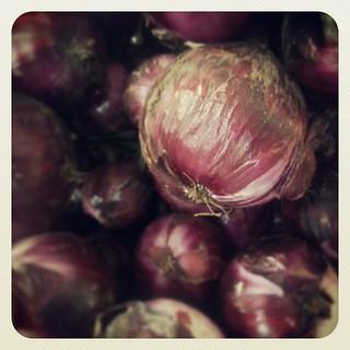 Cebollas de Guayonje, de lo mejor de Tacoronte | by Pedro Baez Diaz @pedrobaezdiaz