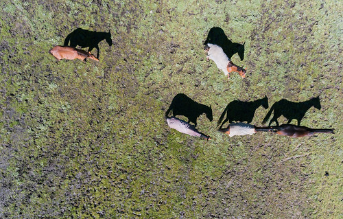 agriculture boggy colour country farm fromabove horizontal horse lookingdown paddock rural several shadow southernblackbream lurg victoria australia au
