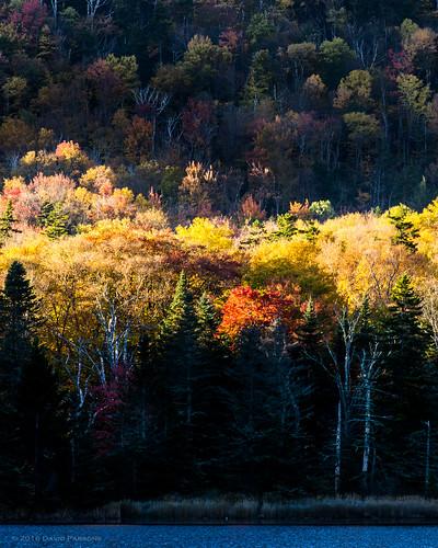 autumn beaverpond fall graftoncounty newhampshire northamerica pentaxk5 places pond season unitedstates water woodstock smcpda60250mmf4edifsdm