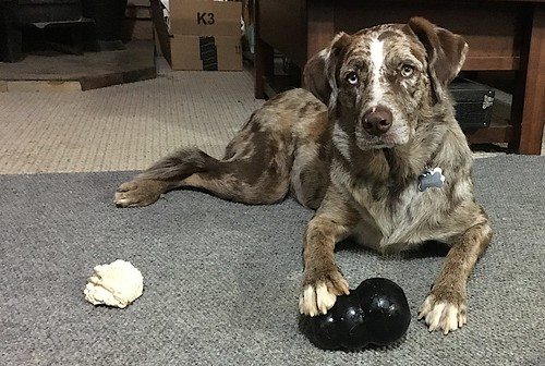 I Have This Kong Under Control