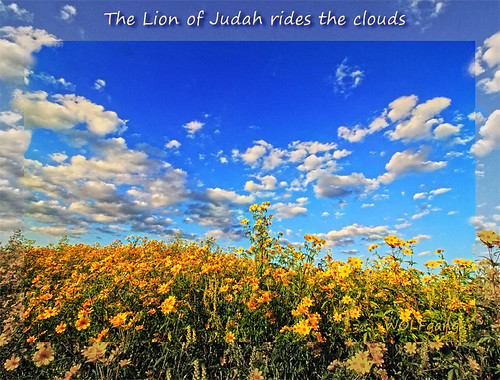 religion christianity lion judah flowers sunset nature september field virginia