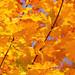 Autumn it is