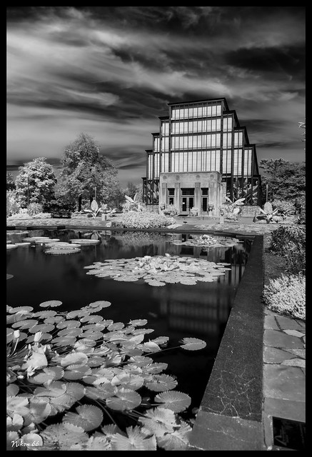 The Jewel Box in Infrared - No. 3