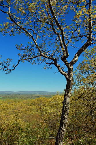 trees mountains forest newjersey spring hiking hills valley creativecommons deciduous appalachianmountains greatvalley warrencounty jennyjumpstateforest jennyjumpmountain jennyjumpstatepark temperatedeciduousforest