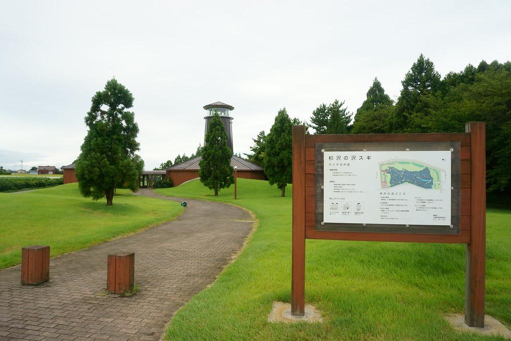 沢スギ公園