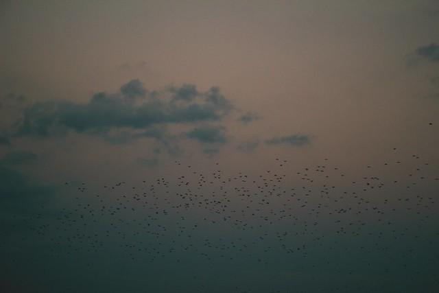 gloomy sky + birds